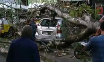 Mobil Avanza tertimpa pohon. (Ist)
