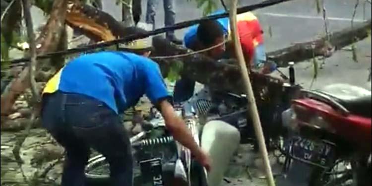 Motor Supra saat dievakuasi dari reruntuntuhan pohon. (ist)