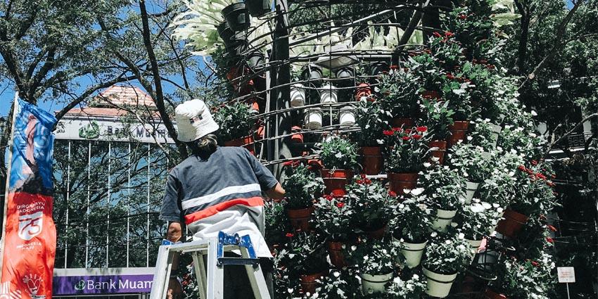 Pegawai Pemkot Malang sedang mempercantik taman kota di jalan Kerta Negera, Kota Malang dengan tanaman bunga warna merah dan putih. (memo x/cw2)
