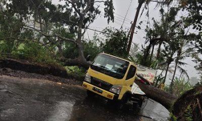 Kondisi truk saat tertimpa pohon. (ist)