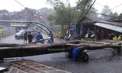 Pohon Tumbang Makan Korban, Pengendara Motor dan Bengkel jadi Sasaran